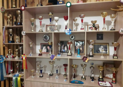 Кубки и награды