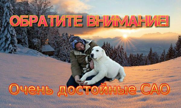 """Помет щенков алабая """"С"""""""