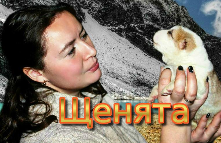 Купить щенка алабая