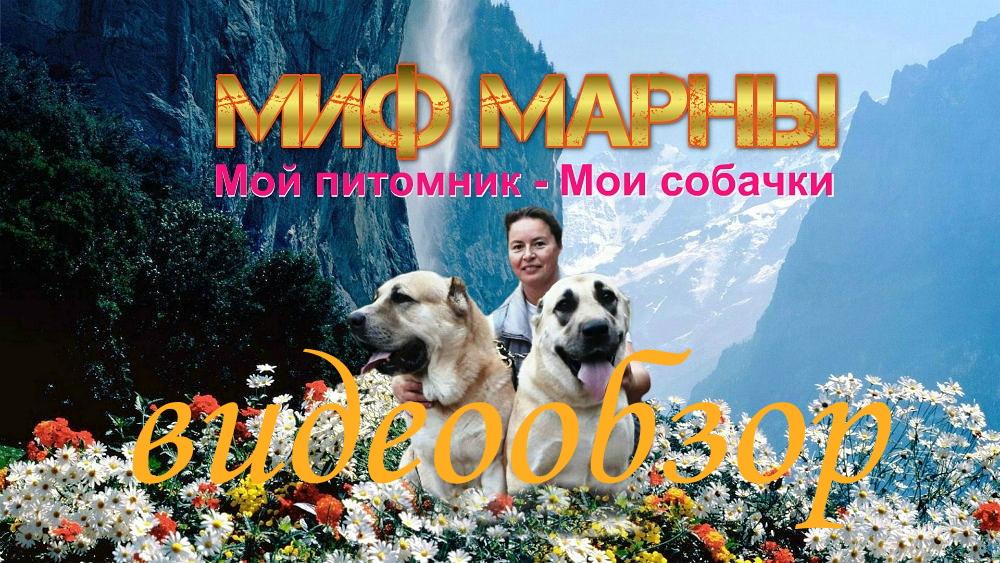 питомник алабаев